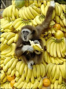 Monkey on pile of bananas